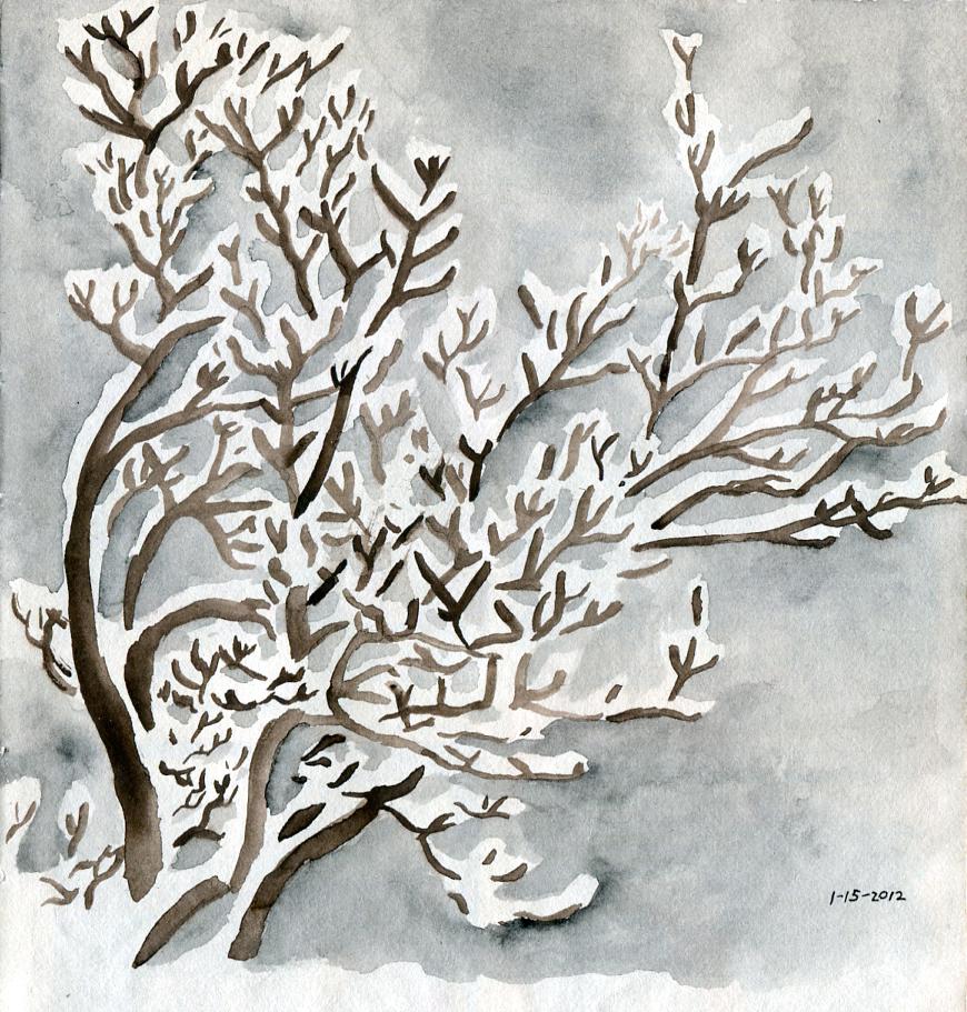 Snow On Magnolia Tree